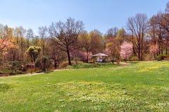 Sakura fleurissant dans le jardin japonais image stock