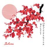 Sakura fleurit le fond de vecteur Image libre de droits