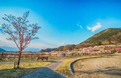 Sakura, flor de cerejeira na árvore da primavera no céu azul Fotografia de Stock Royalty Free