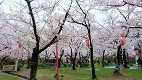 Sakura, flor de cerezo en el castillo de Wakayama imágenes de archivo libres de regalías