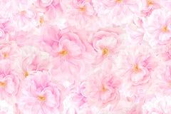 Sakura florece fondo libre illustration