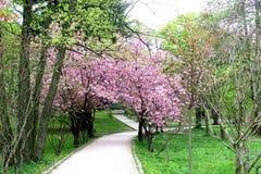 Sakura is flourishing in the park. A wonderful place to stroll Stock Photo