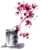 Sakura Flower Immagini Stock Libere da Diritti