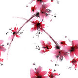 Sakura Flower Fotografia Stock