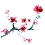Sakura Flower Royaltyfri Fotografi