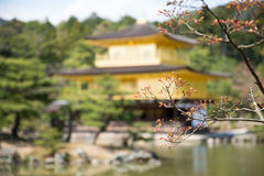 Sakura Flower with background of Kinkakuji Temple Royalty Free Stock Image