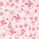 Sakura flower background. Watercolor sakura flower background. Cherry flower seamless pattern Stock Images