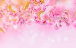 Sakura flower cherry blossom. Greeting card background template. Shallow depth. Soft toned stock photo