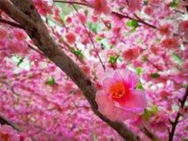 Sakura Flower rose artificielle en gros plan sur le fond brouillé de pétales Photos stock