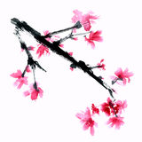 Sakura flower. Royalty Free Stock Photo