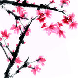Sakura flower. Royalty Free Stock Image