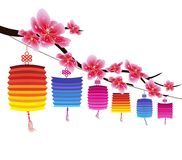 Sakura flowers background. Cherry blossom and lantern  white background. Chinese new year Royalty Free Stock Images