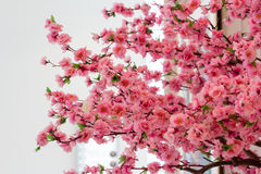 Sakura flowers blooming Stock Photo