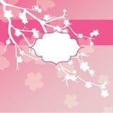 Sakura flowers card Stock Photo