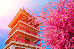 Sakura flowers or cherry blossoms and Pagoda on japan style on blue sky background Royalty Free Stock Photos