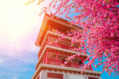 Sakura flowers or cherry blossoms and Pagoda on japan style on blue sky background Royalty Free Stock Photography