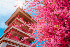 Sakura flowers or cherry blossoms and Pagoda on japan style on blue sky background Royalty Free Stock Photo