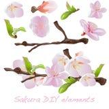 Sakura flowers elements. Royalty Free Stock Image