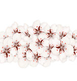 Sakura Flowers, Floral Banner for Springtime Royalty Free Stock Photos