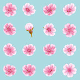 Sakura flowers icon set . EPS 10 vector illustration