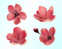 Sakura Flowers Icons. Isolated Vector Objects. Royalty Free Stock Images