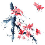 Sakura. Flowers illustration.. Royalty Free Stock Image