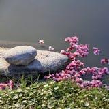 Sakura flowers in the lake. Japanese stone garden. Stock Photography