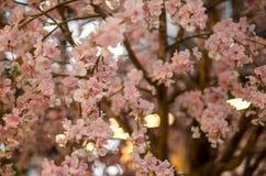 Sakura Flowers o Cherry Blossoms artificial en el estilo japonés para la decoración del hogar y del edificio Imagen de archivo