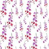Sakura flowers. pattern Royalty Free Stock Photos
