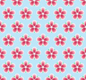 Sakura Flowers Seamless Pattern. Floral Texture. Spring Background with Cherry Blossom. Stock Photography