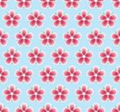 Sakura Flowers Seamless Pattern Texture florale Fond de source avec la fleur de cerise Photographie stock
