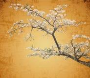Sakura flowers among tea garden Stock Photo