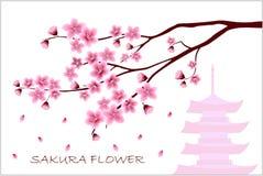 Sakura flowers vector illustration. n Stock Photo