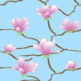 Sakura flowers vector seamless abstract pattern Stock Photography