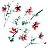 Sakura flowers Stock Photography