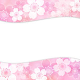 Sakura frame. Frame of cherry blossoms in spring Stock Photos