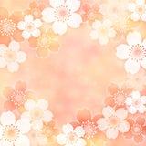 Sakura frame. Frame of cherry blossoms in spring Royalty Free Stock Photo