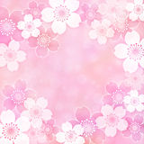Sakura frame. Frame of cherry blossoms in spring Royalty Free Stock Image