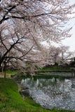 Sakura with Fukaya Station#3. Sakura at JR Fukaya Station , and pond stock photos