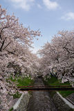 Sakura with Fukaya Station#5 Royalty Free Stock Image