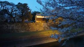 Sakura fuori del castello di Kumamoto fotografia stock