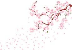 Sakura Gałąź z pastelowymi kwiatami, liśćmi i wiśnia pączkami, Czere?niowi p?atki Odizolowywaj?cy na bia?ej t?o ilustraci royalty ilustracja