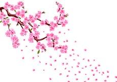 Sakura Gałąź z purpurowymi kwiatami, liśćmi i wiśnia pączkami, Wiśnia opuszcza płatki pojedynczy białe tło ilustracja wektor