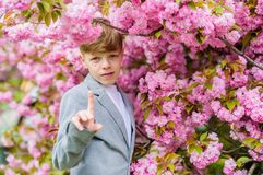Sakura garden concept. Guy enjoying cherry blossom sakura. Confident stylish child enjoy warm spring day. Boy. Fashionable teen posing near sakura. Child pink stock photo