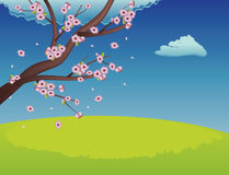 Sakura on Grass Field Royalty Free Stock Photos
