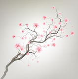 Sakura Royalty Free Stock Photos