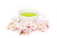 Sakura herbata Obraz Royalty Free