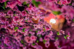 Sakura with lights Royalty Free Stock Images