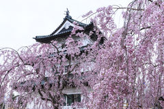 Sakura and hirosaki castle Stock Photo