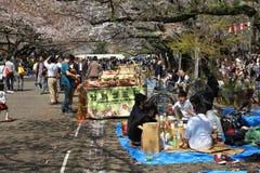 Sakura i Tokyo Arkivfoton